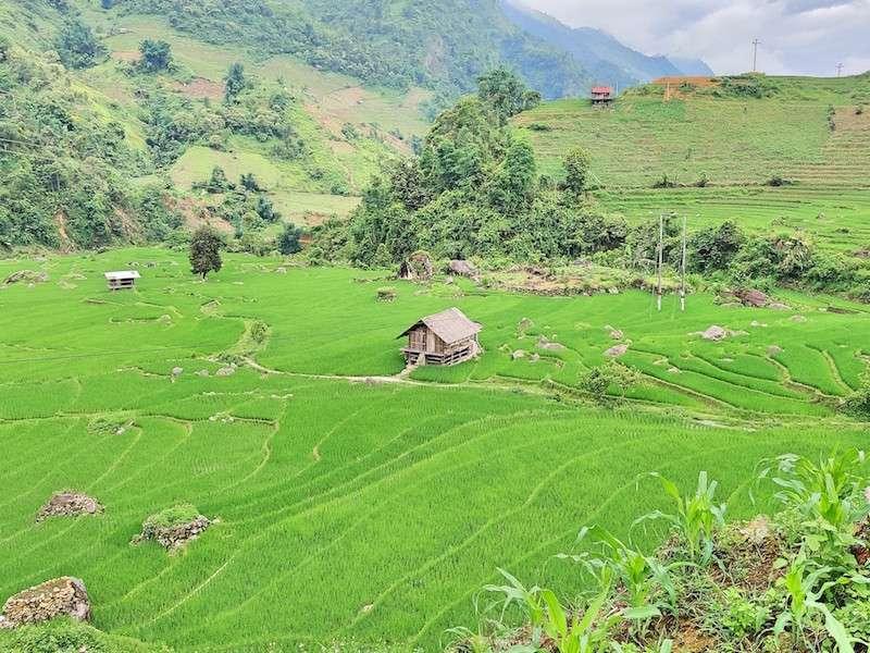 Cabaña en medio de campos de arroz en Vietnam. Visitar terrazas de campos de arroz o hacer trekking en Sapa, Vietnam, es una de las mejores cosas que hacer